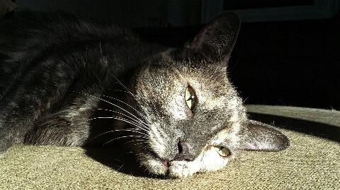Sunloving Dora